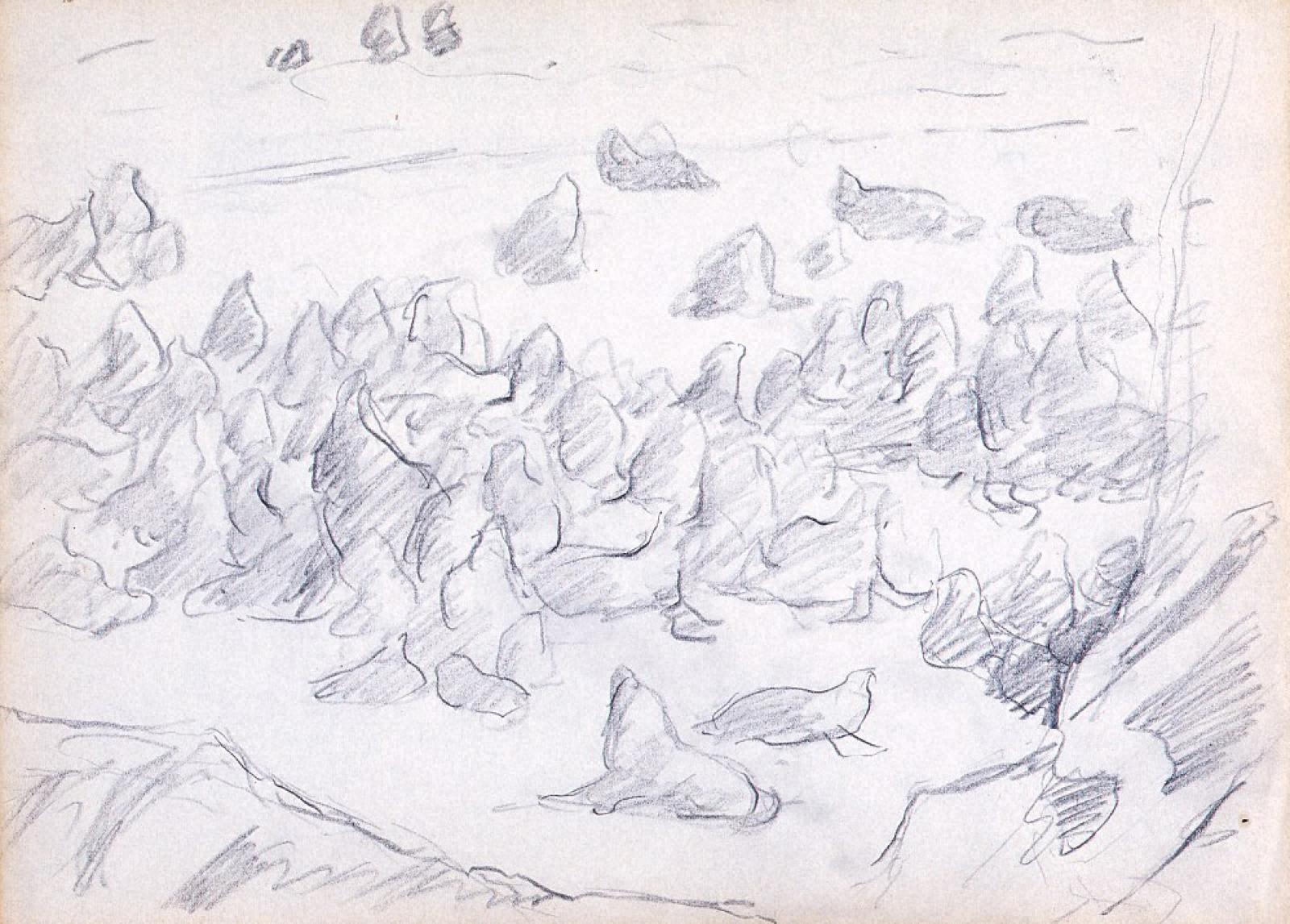 海豹島デッサン 6