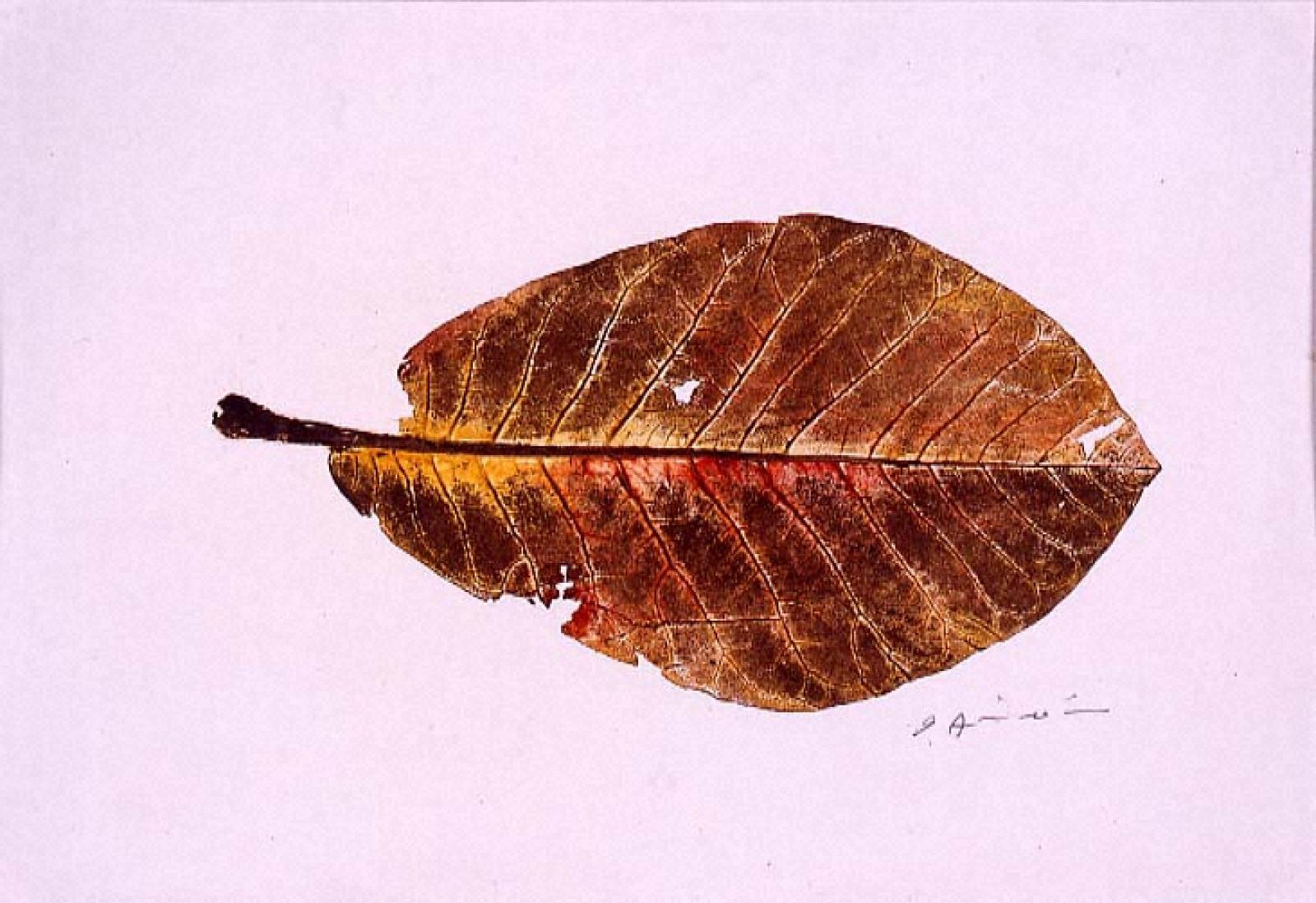 木の葉(辛夷)