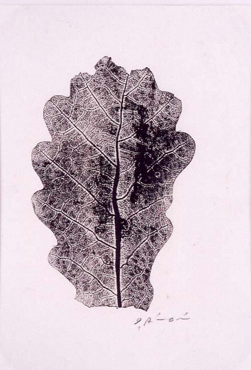 木の葉(柏)