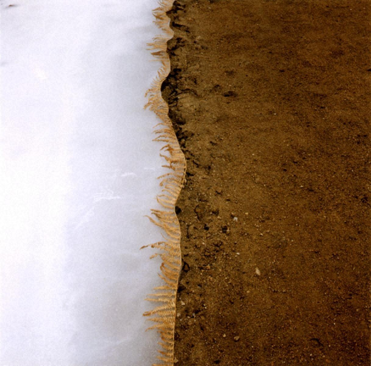 氷面、シダの葉/フランス、リムーザン地方、ヴァシヴィエール湖、1987年