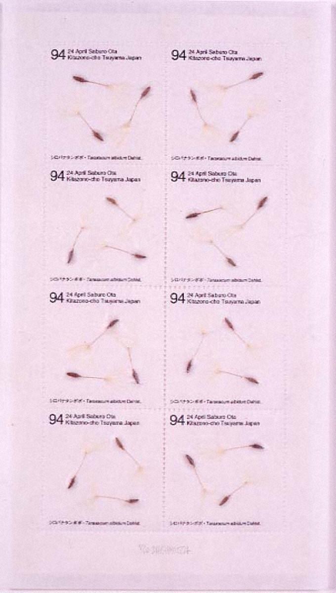 Seed Project シロバナタンポポ 1994年4月24日岡山県津山市北園町