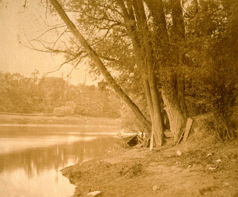 自然の習作 水辺の樹木