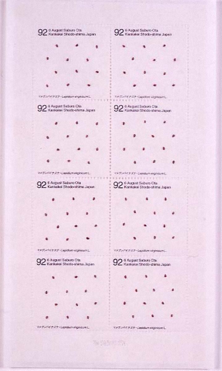 Seed Project マメグンバイナズナ Lepidium virginicum L.1992年8月6日香川県小豆島寒霞渓