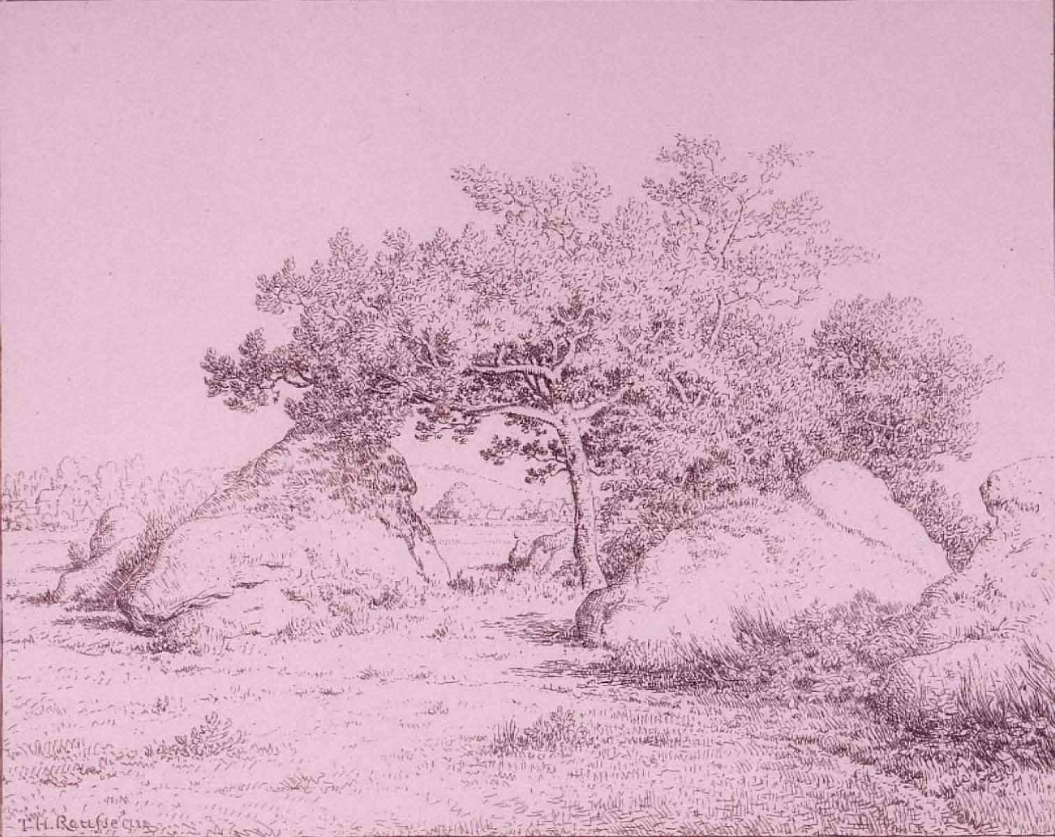 ビオーのサクランボの木