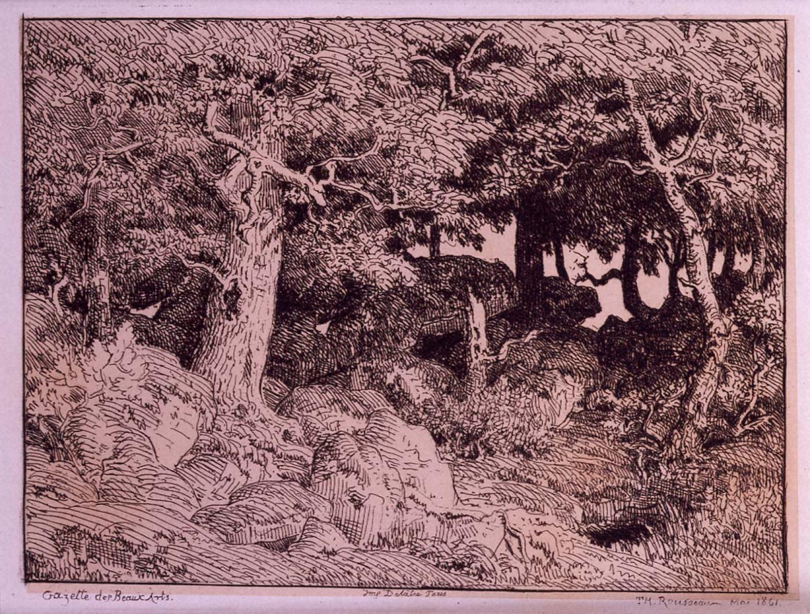 樫の木と岩