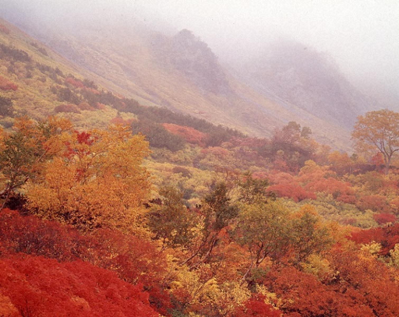 霧と紅葉の高根ヶ原稜線