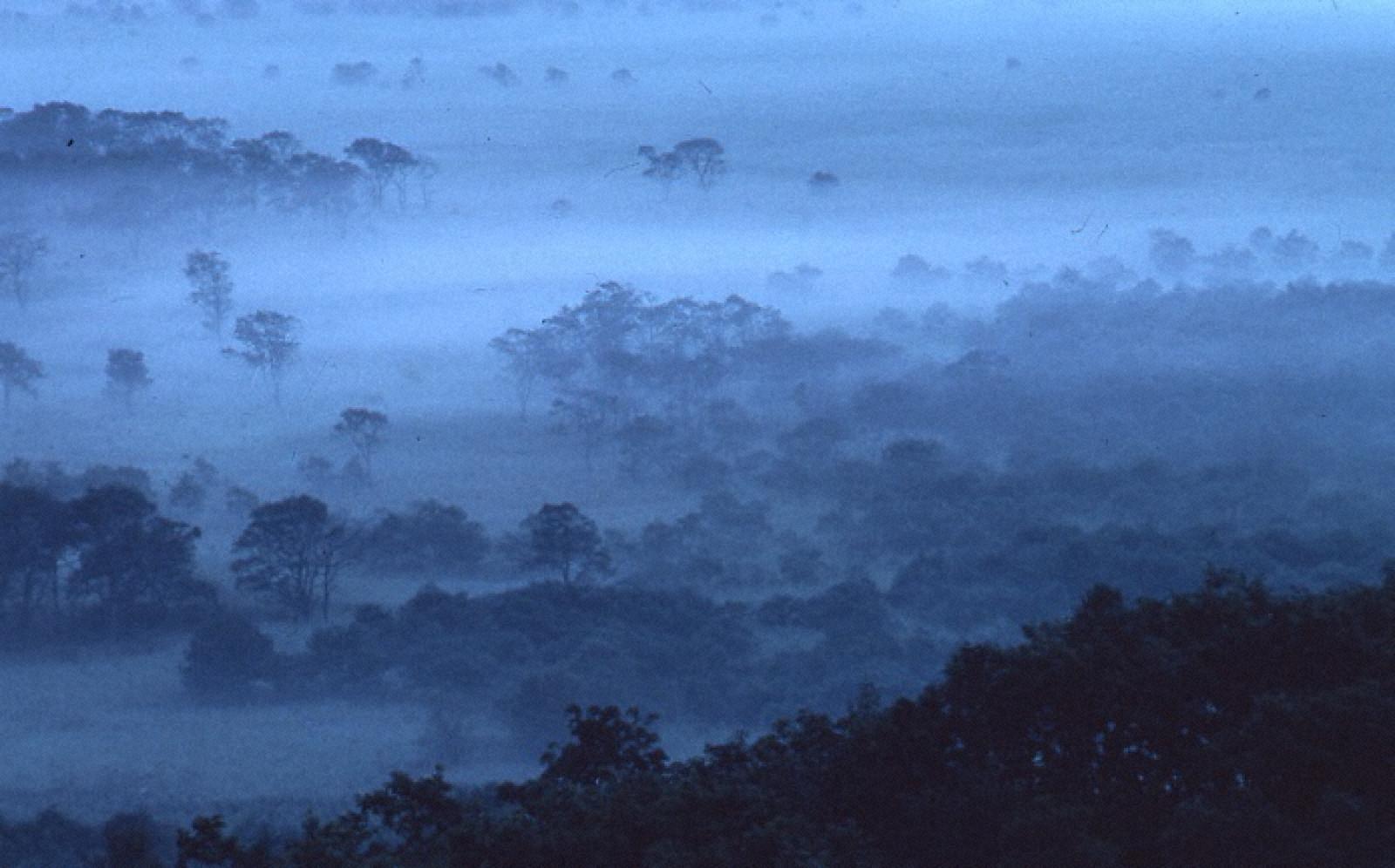 朝霧の釧路湿原