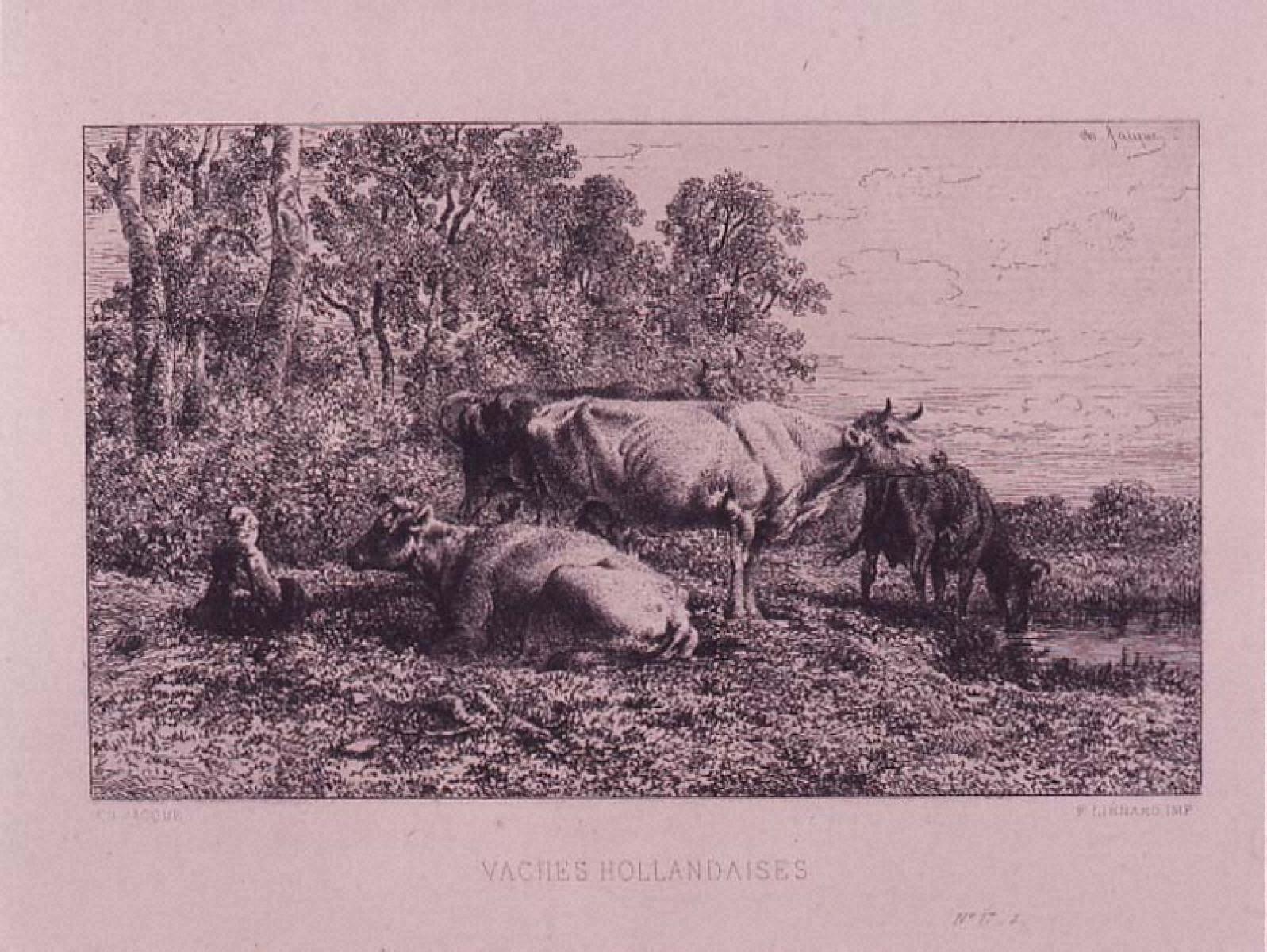 オランダ牛