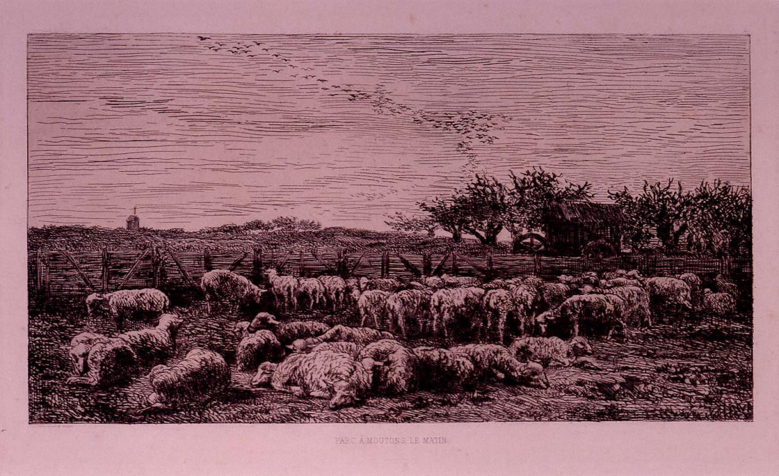 羊の柵囲い