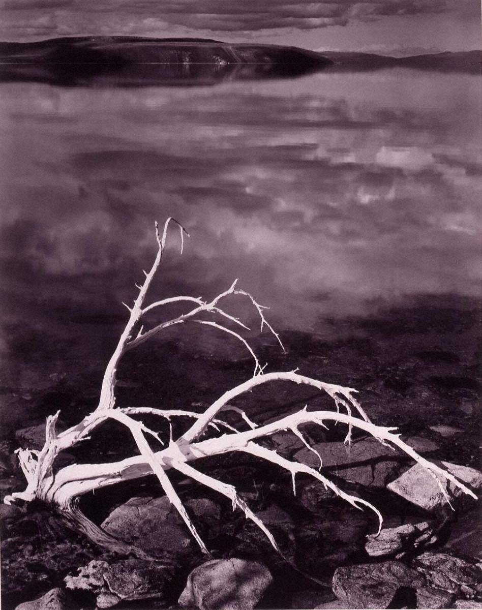 ポートフォリオⅦ: 白い枝