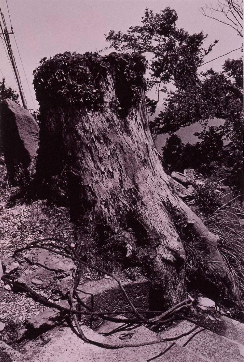 ラスト・コスモロジー 切られた樹