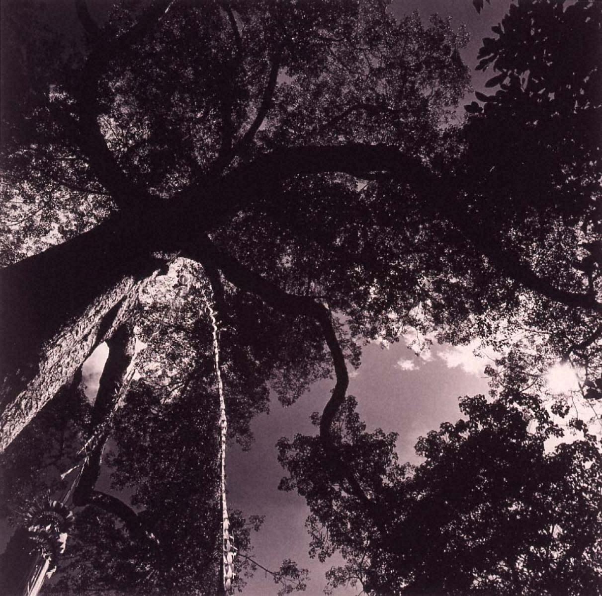 ラスト・コスモロジー 聖なる木、三百年のカポック