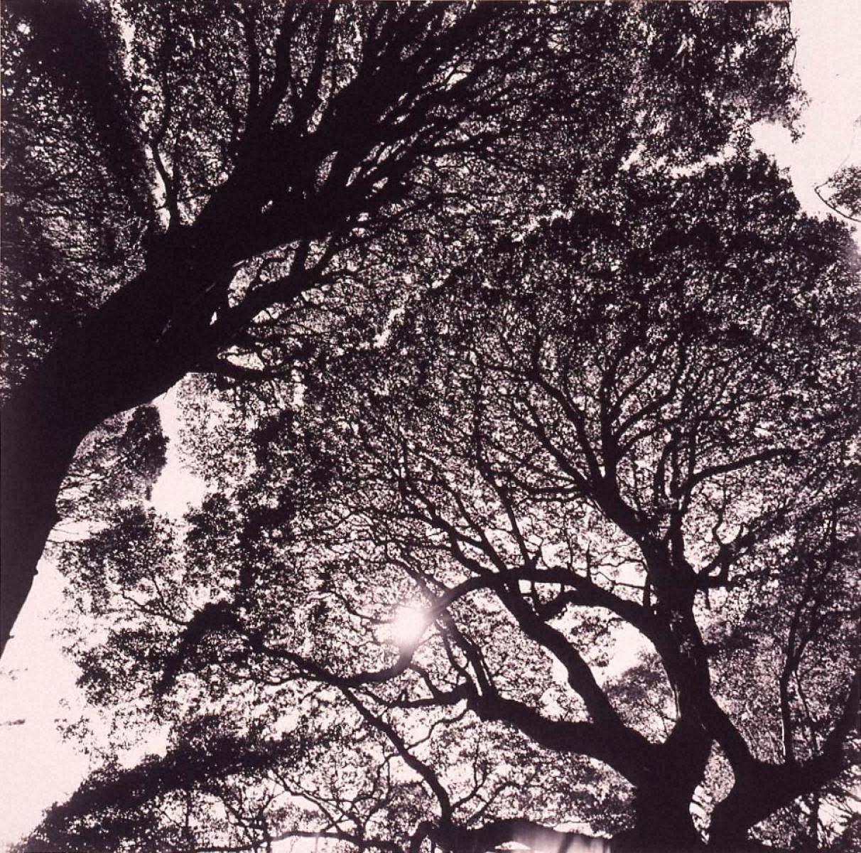 ラスト・コスモロジー 日蝕と五百年樹