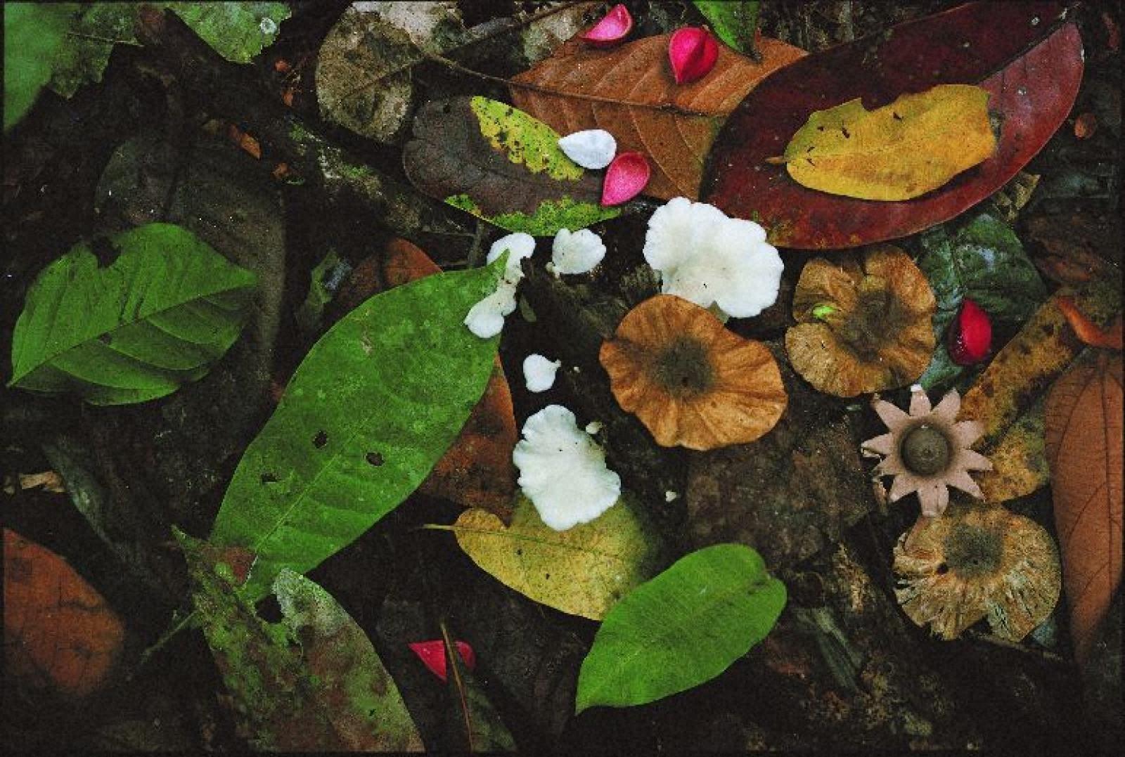 奇跡の惑星・地球 林床を彩るキノコ、コスタリカ