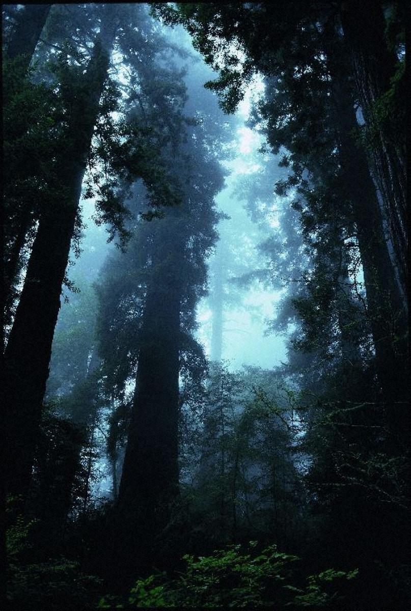 奇跡の惑星・地球 レッドウッド国立公園、アメリカ