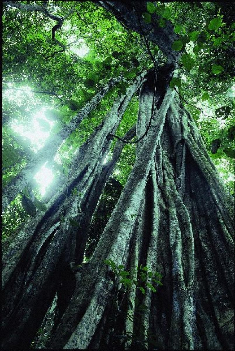 奇跡の惑星・地球 絞め殺しの植物、マヌー、ペルー
