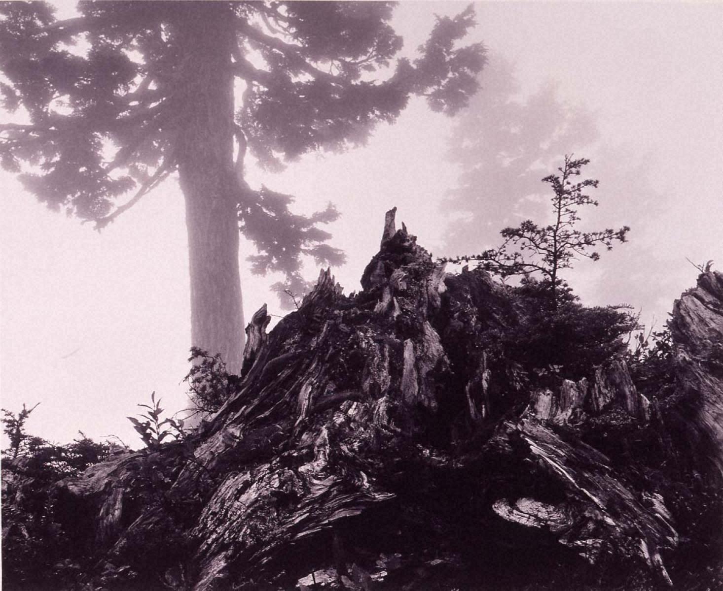 ポートフォリオⅦ: 木の切り株と薄霧