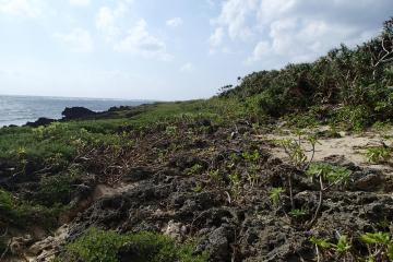 久高島の海岸植物群落(1536.jpg)