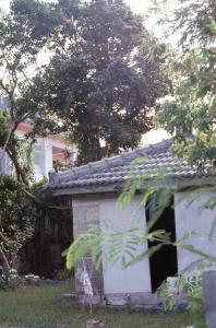 安座真大殿内のサキシマスオウノキ(44161.jpg)