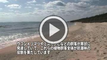 伊敷浜の海岸植物群落(47860.jpg)