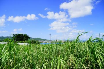 新里の風景(48054.jpg)