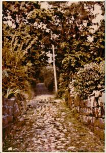 南風原区の風景(48158.jpg)