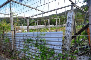 佐敷尋常小学校跡地(568.jpg)