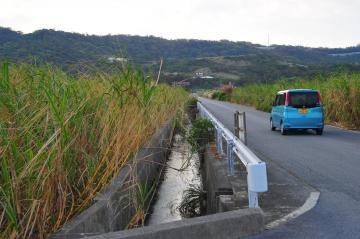 津波古郊外のさとうきび畑(584.jpg)