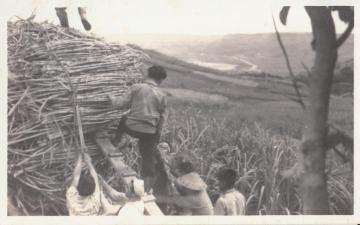 さとうきび畑での労働(663.jpg)