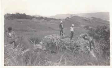 さとうきび畑での労働(664.jpg)